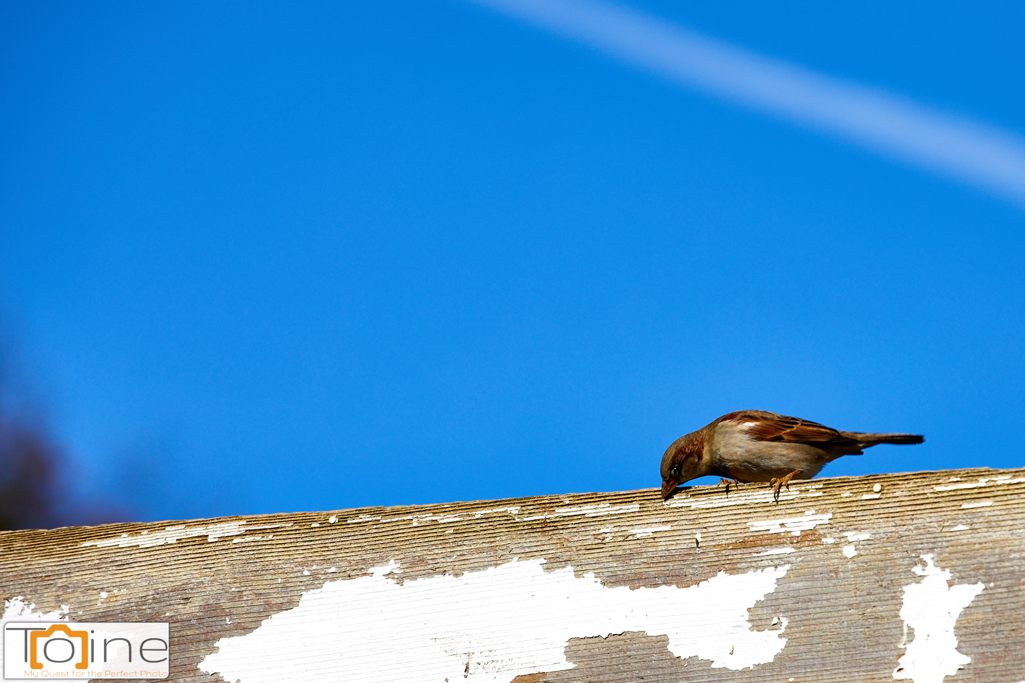 This bird was sitting on top of a structure, but I was able to grab a quick shot!